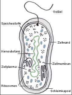darmflora antibiotika
